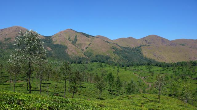 Wir fahren oft auf Trails in den Teeplantagen